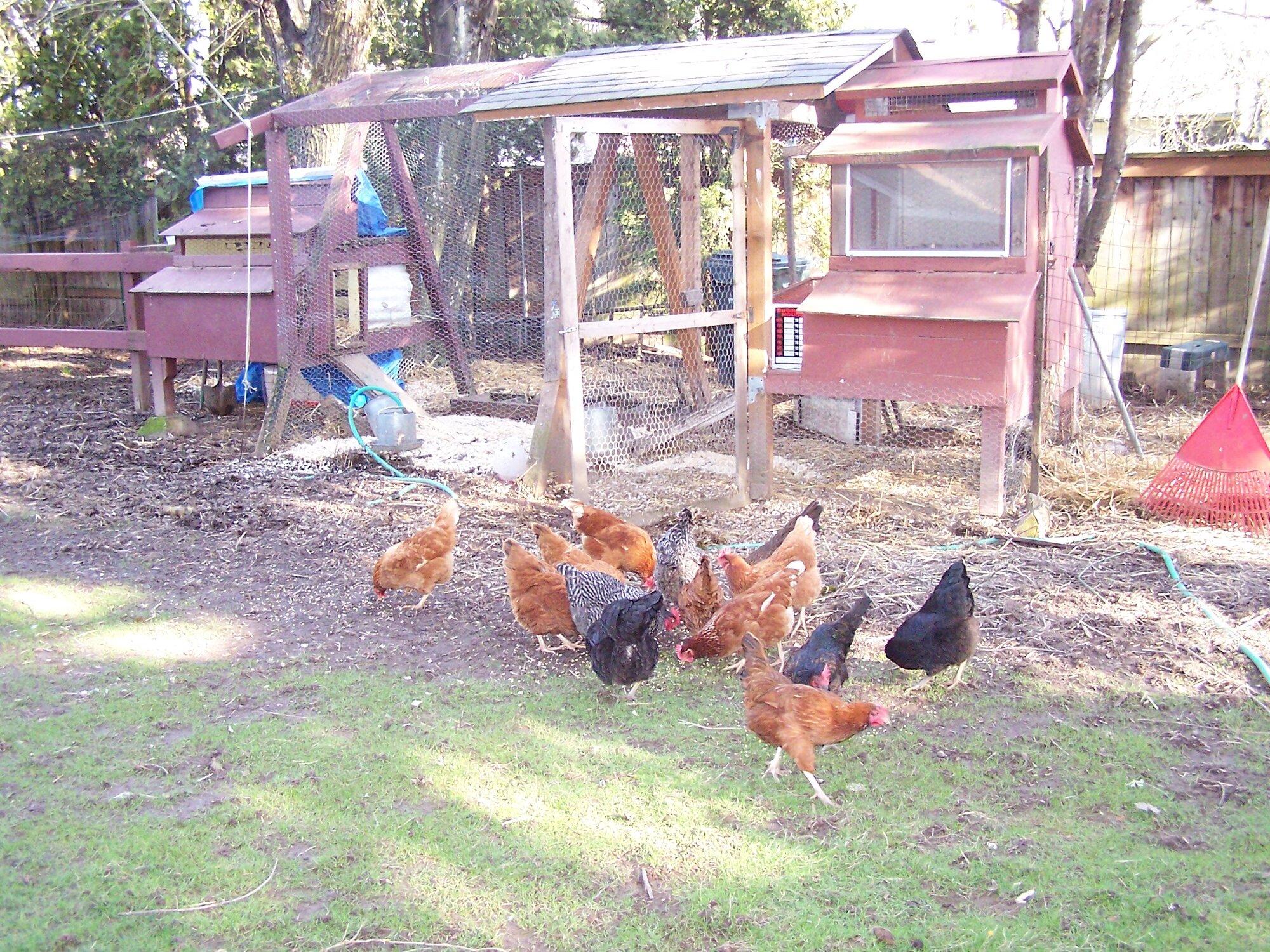 One of my older flocks.jpg