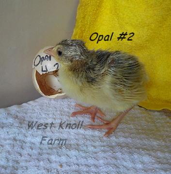Opal #2 5-23-17.jpg