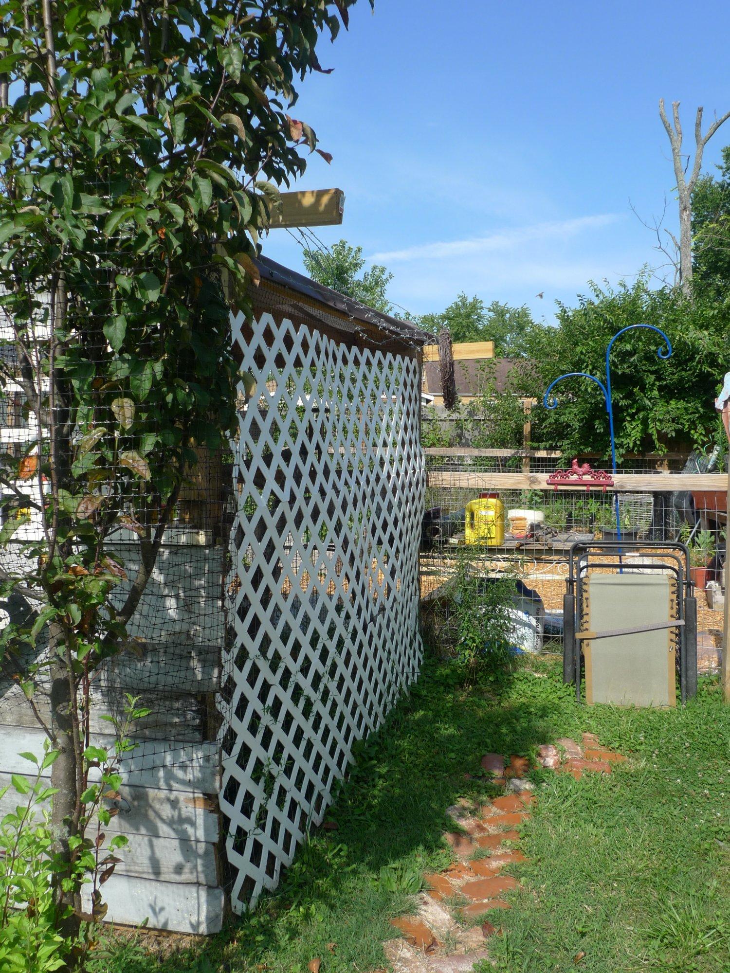 pic of lattice.JPG