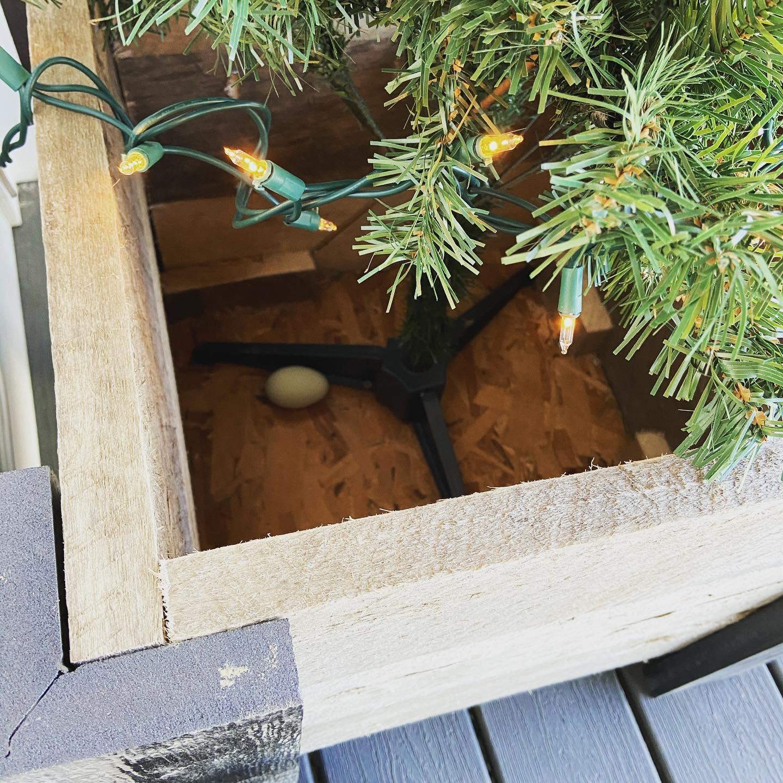 Planter Egg.jpg