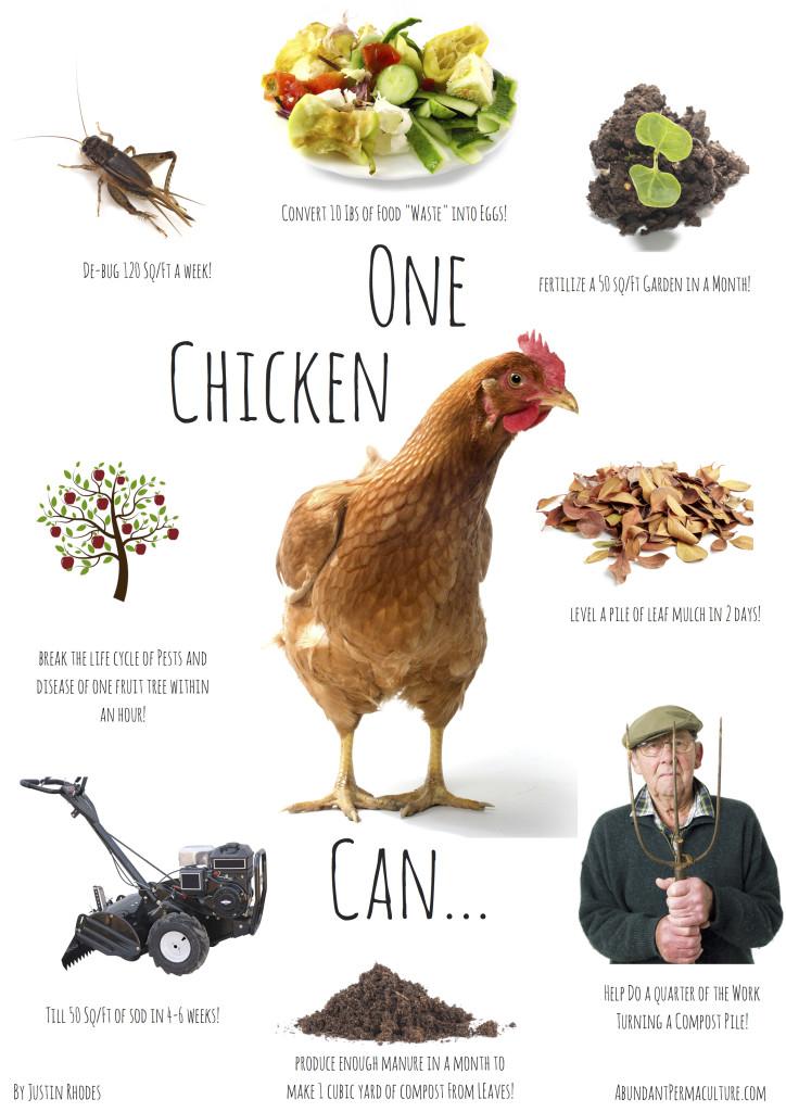 Power-of-one-chicken-724x1024.jpg