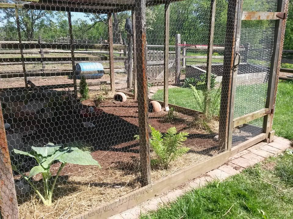 quailrun.jpg