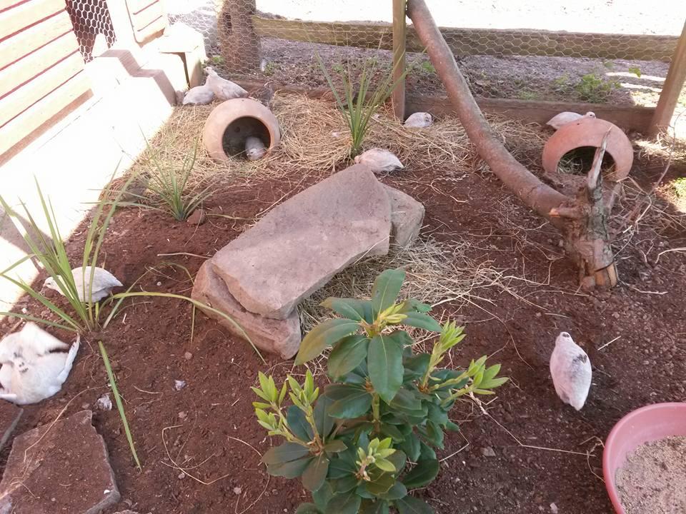 quailrun1.jpg