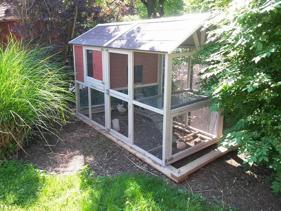 quailrun4.jpg