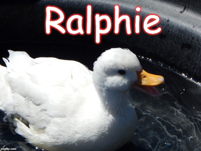 ralphie_2.jpg