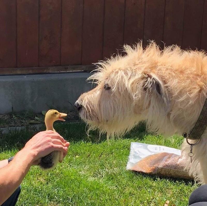 reminton duckie .jpg