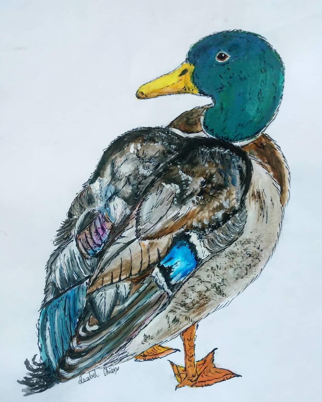 Rouen Drake watercolor.png