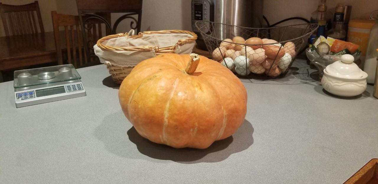 Sacrificial Pumpkin for Thanksgiving 11.23.2020.jpg