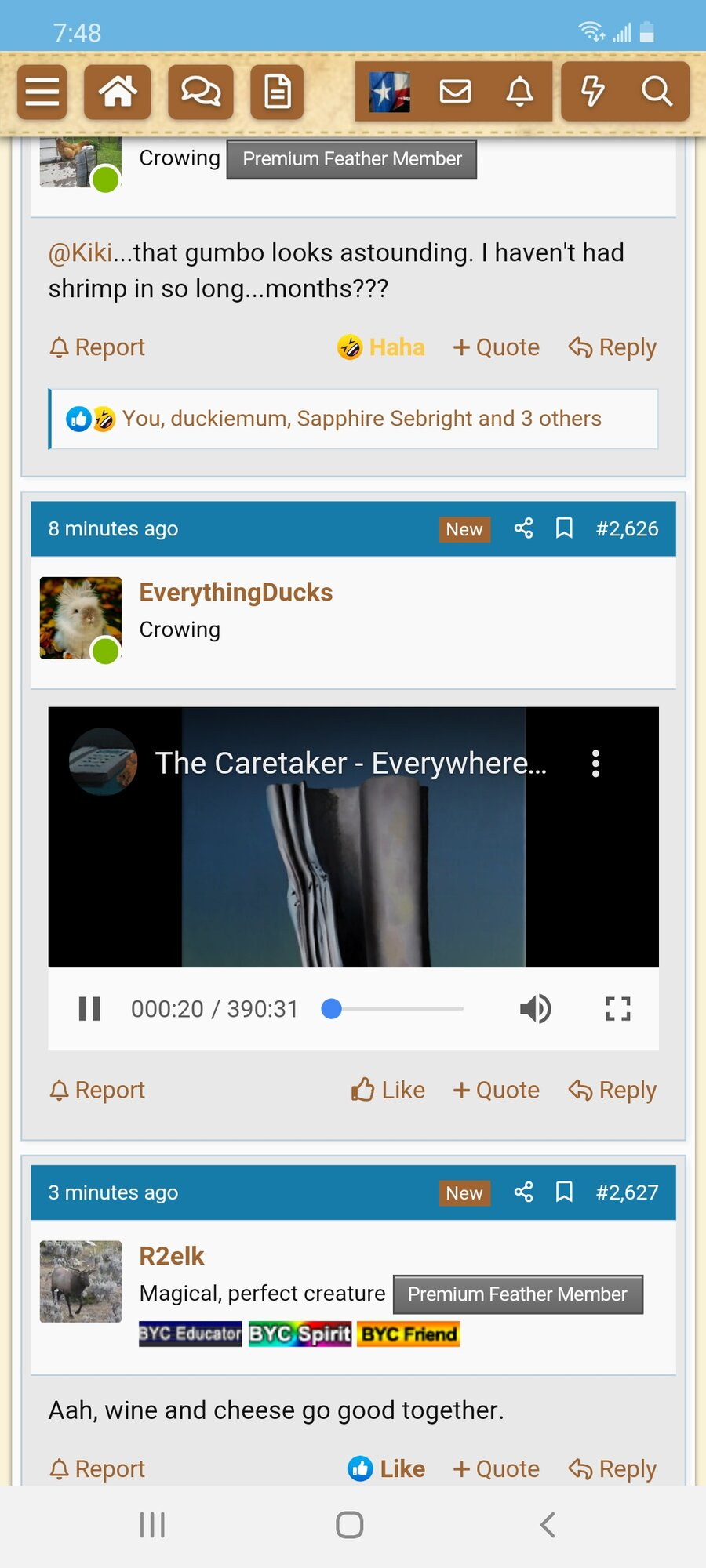 Screenshot_20201025-194842_BackYard Chickens.jpg
