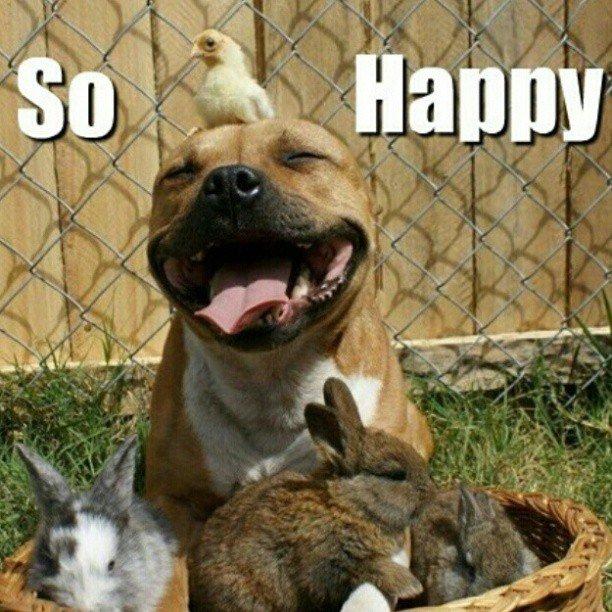 Silly-Animal-Memes.jpg