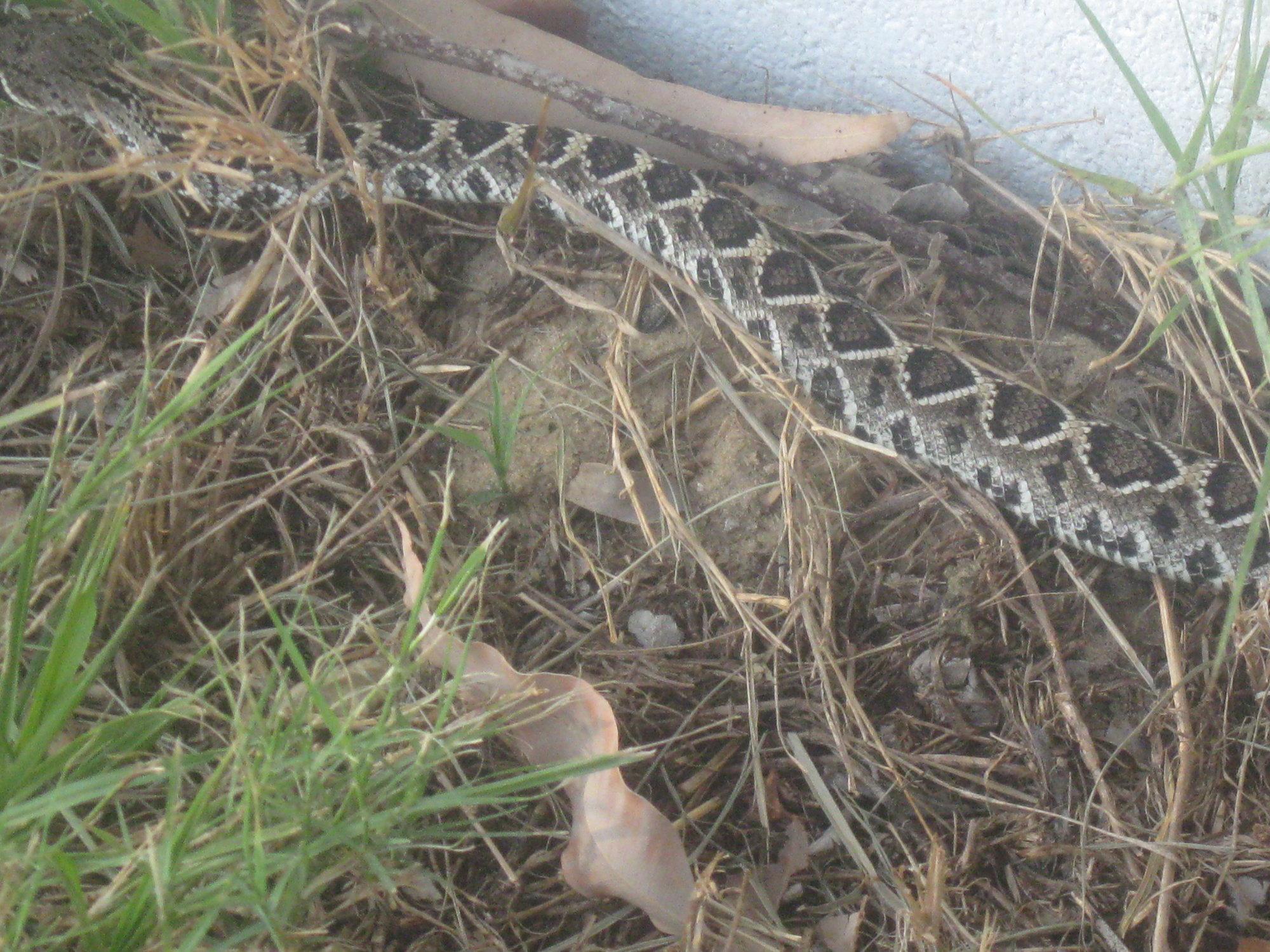 snake 045.jpg