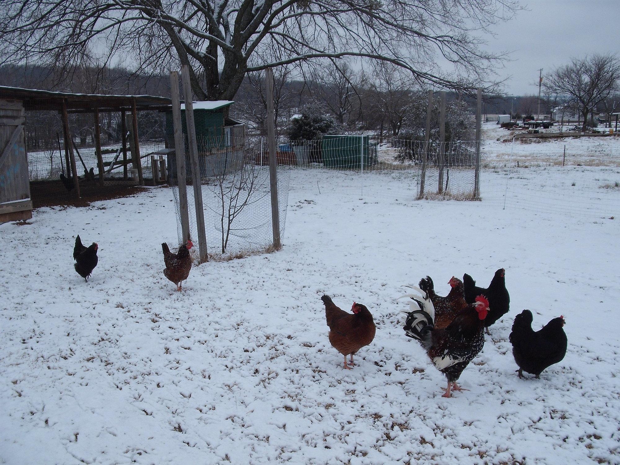 Snow Feb 2013.JPG