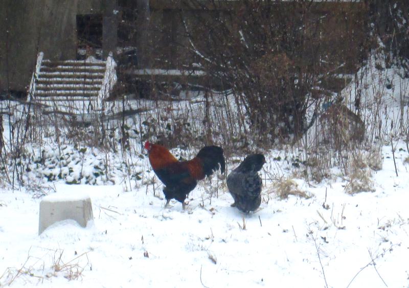 snowbirds.png