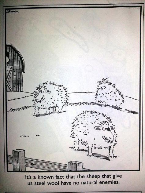 steel wool.jpg