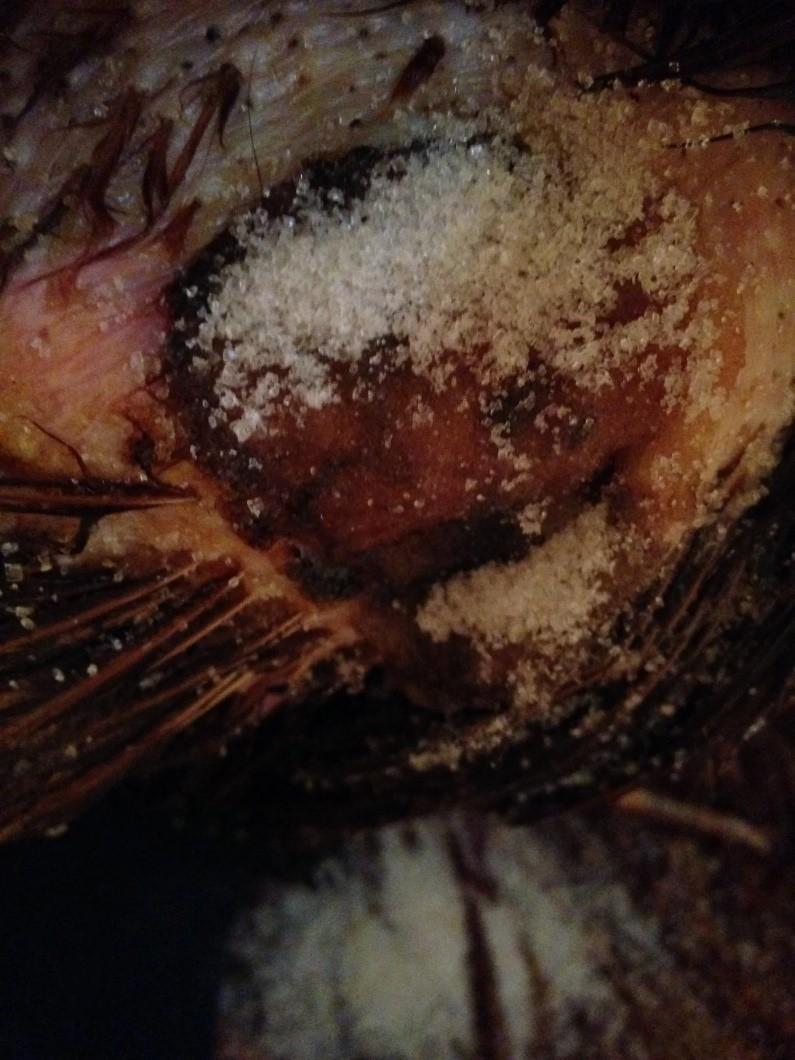 sugar wound.jpg