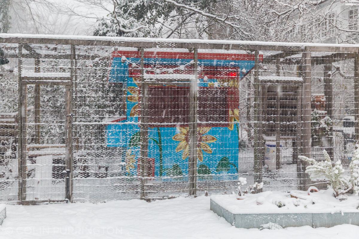 sunflower-chicken-coop-snowstorm.jpg