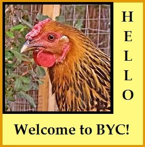 sweet hen face WELCOME.jpg