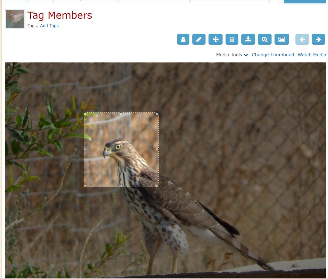 tag_members_1.png