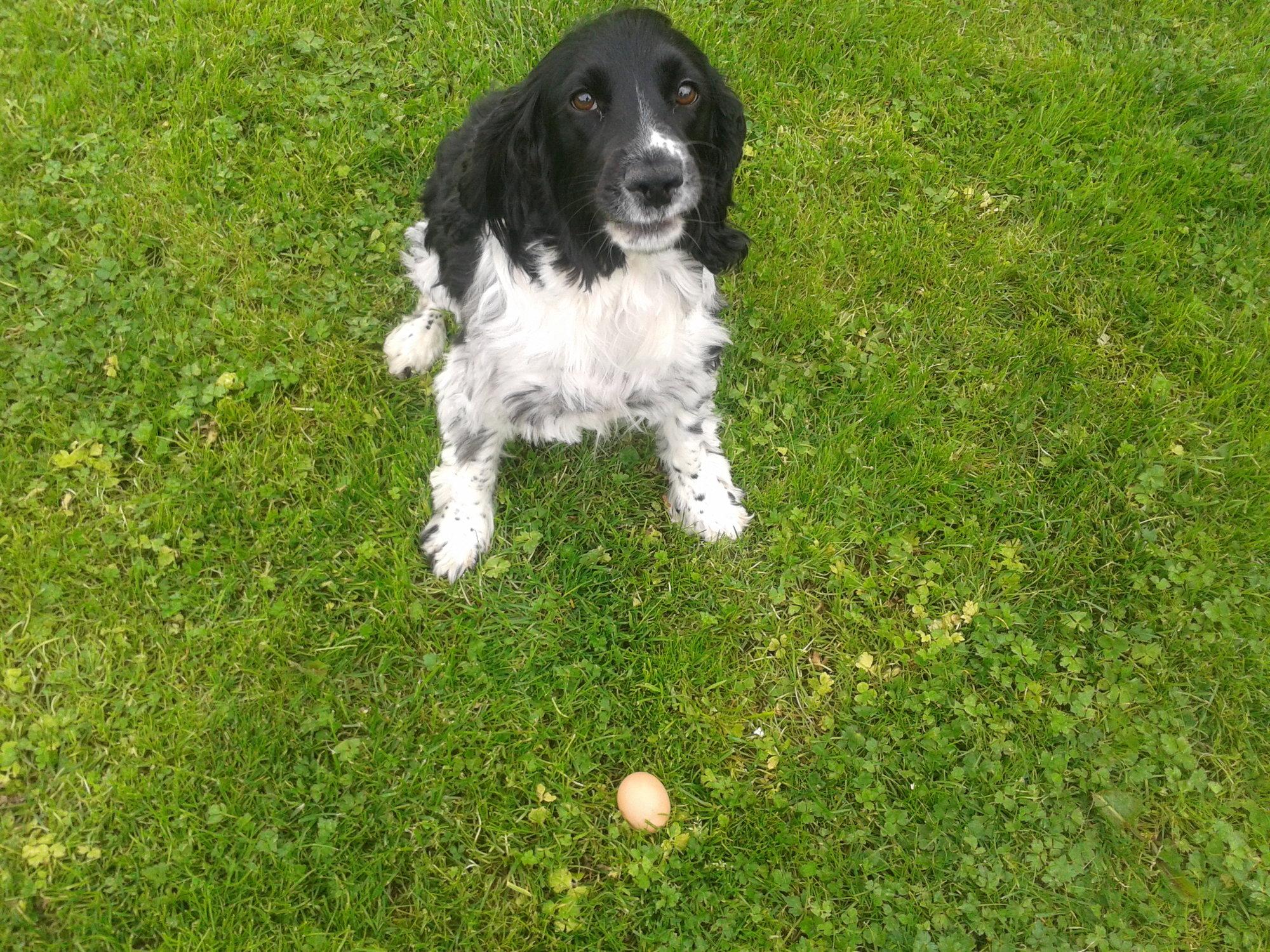 Tara fetched an egg !.jpg