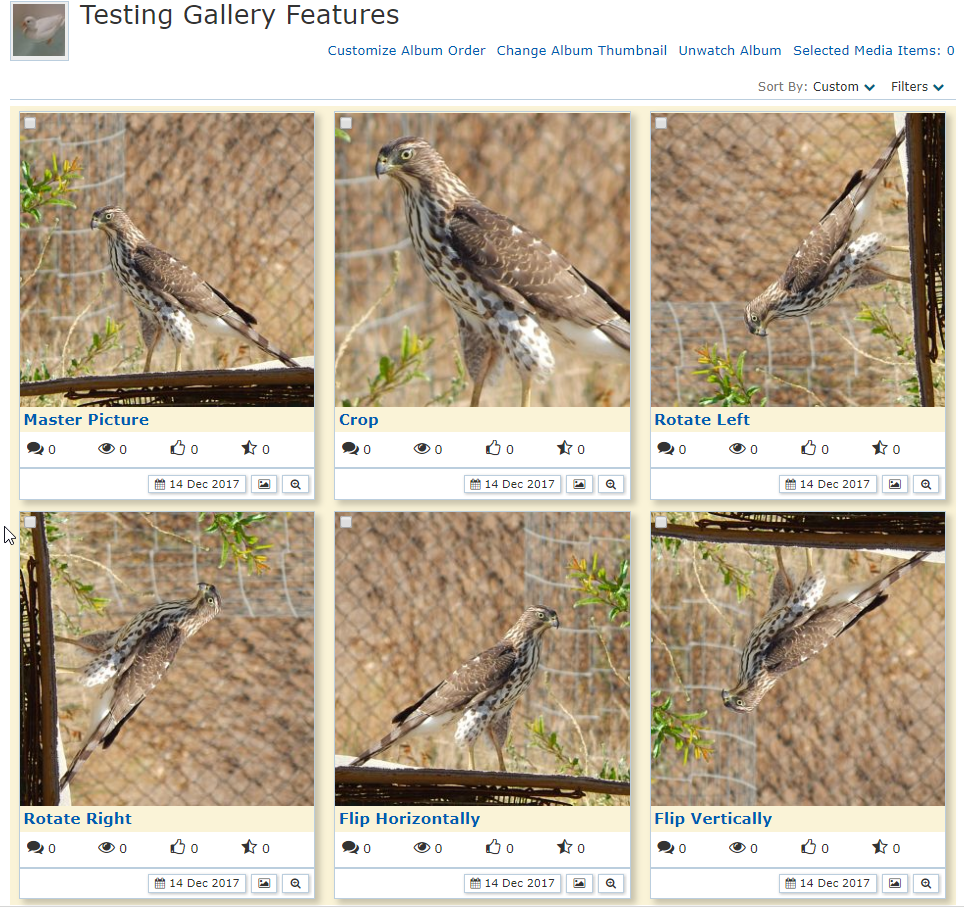 testing_gallery_1.png