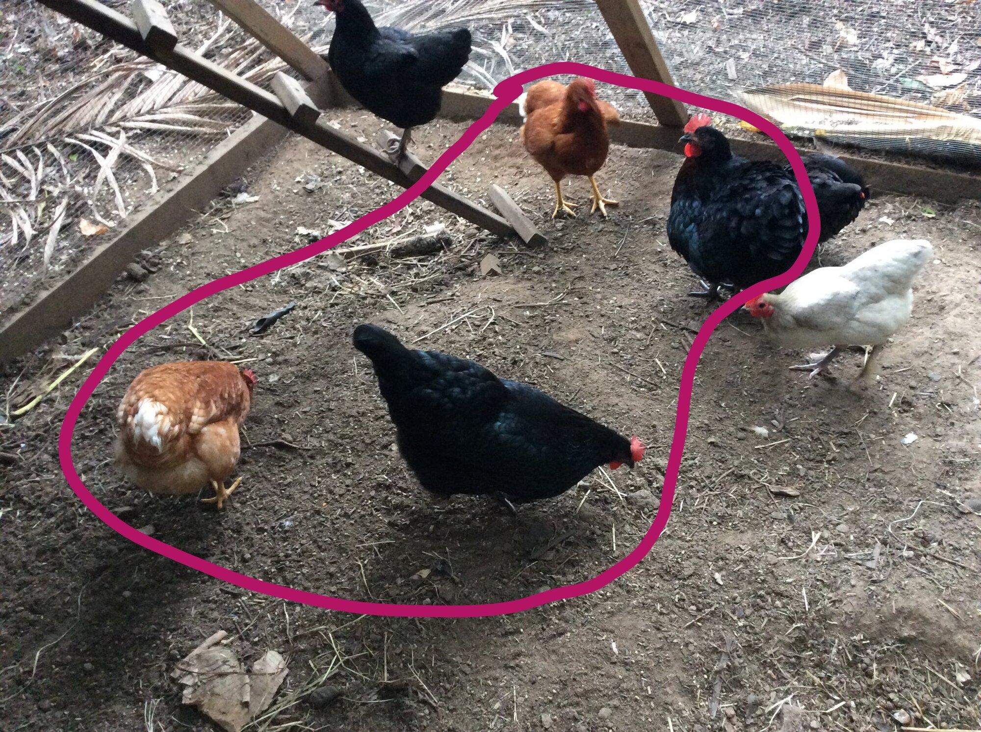 The Flock Chillin'_LI.jpg