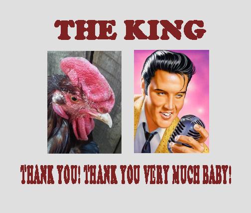 the king!.jpg