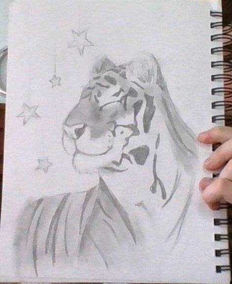 tiger_by_catconfusion_ddqrgm6.jpg