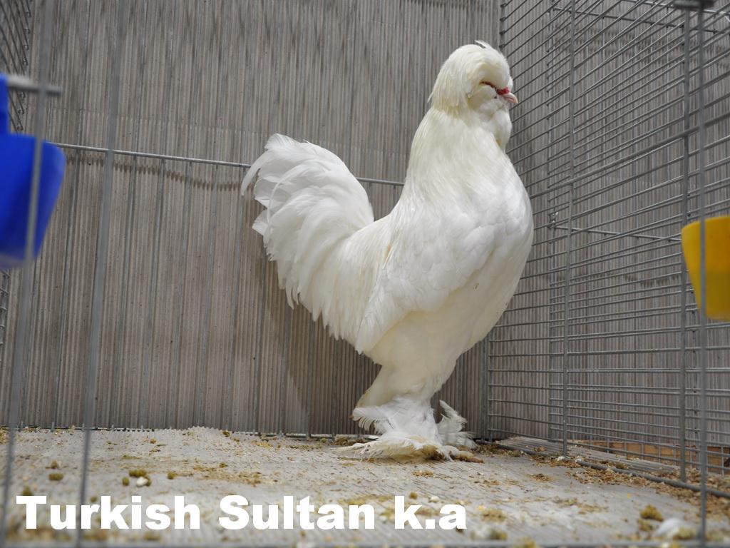 turk (2).jpg