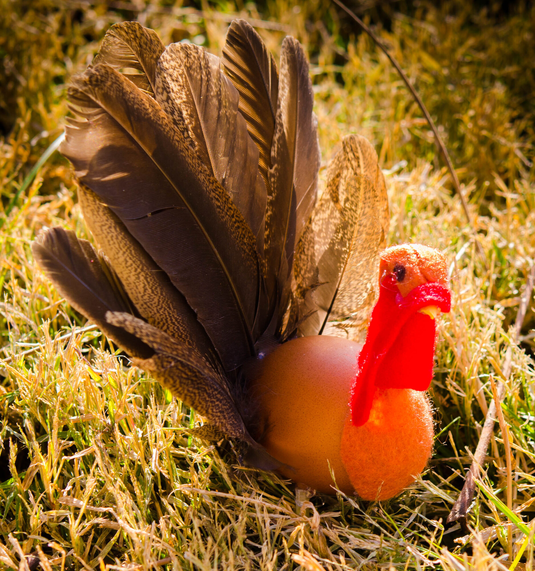 turkey egg.jpg
