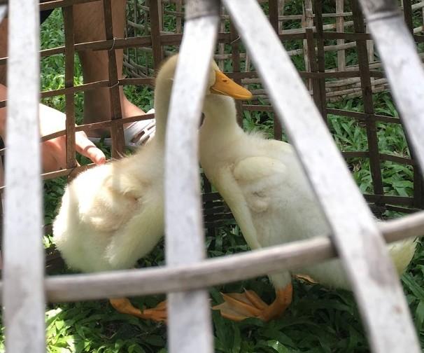 weird-duck-jpg.1599391