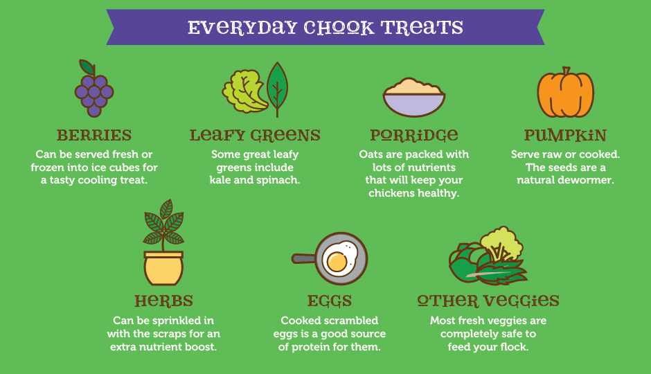 what-do-chickens-eat-throughout-what-do-chickens-eat-a-chicken-treat-chart.jpg