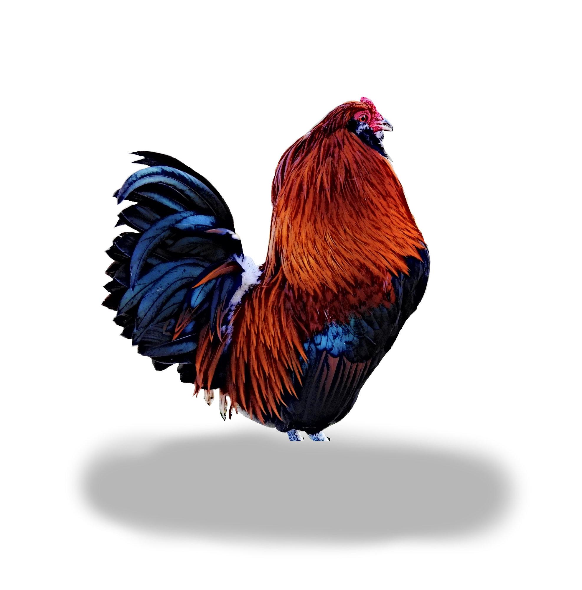 Wheaten Rooster.jpg