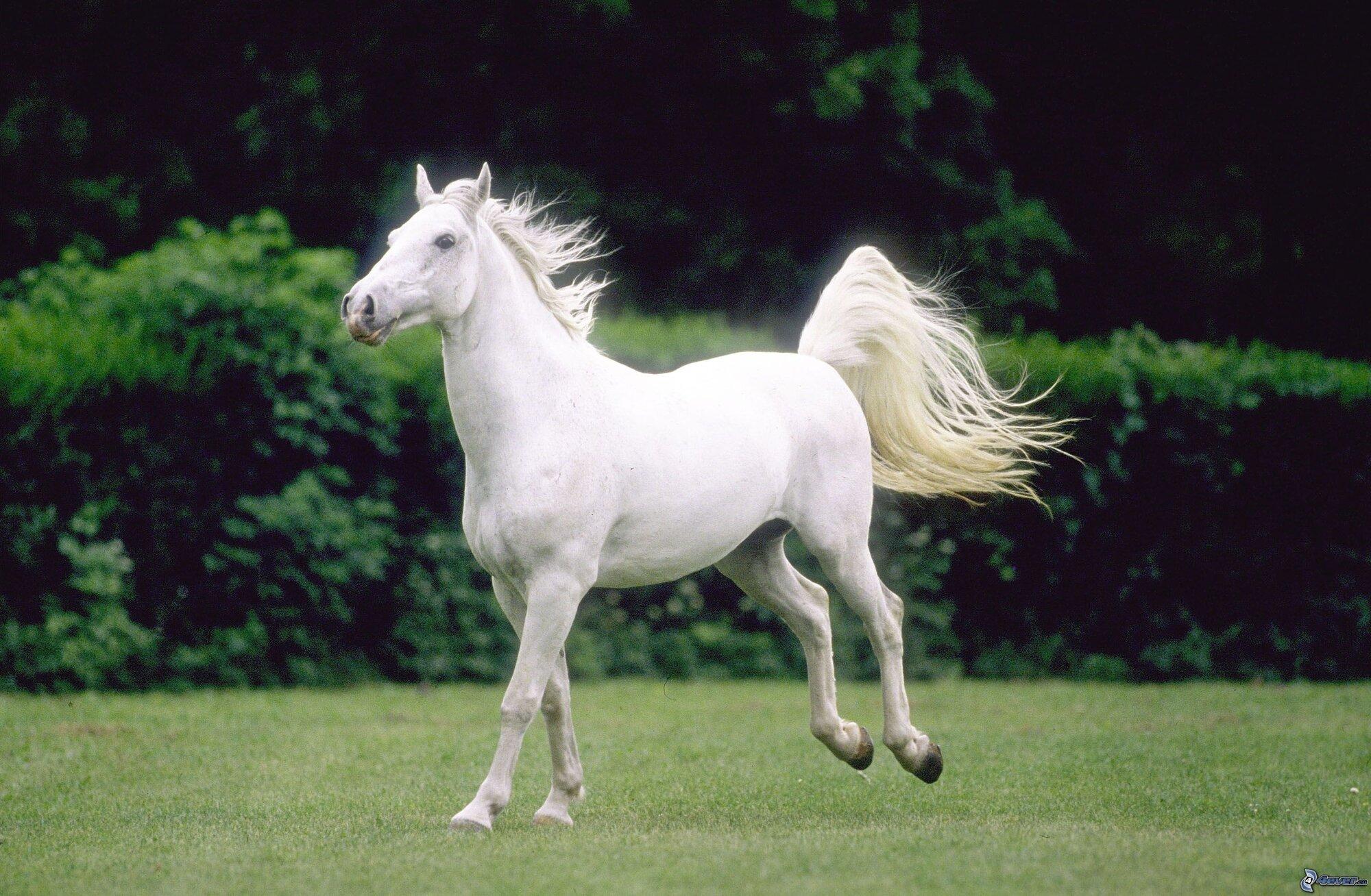 White-Horse-horses-35203707-2996-1960.jpg