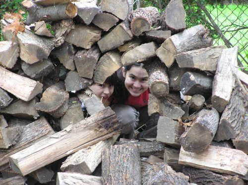 coopforestimpsrestackingwoodpile.jpg