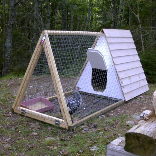 Nuggets the chicky shnoodle shack backyard chickens - Comment construire un poulailler ...