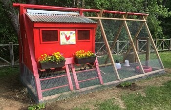 Upcycled Swing Set to Chicken Coop - Gallery   BackYard Chickens