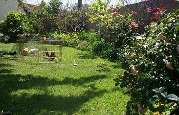 Me And My Little Garden By Gardenerd | BackYard Chickens