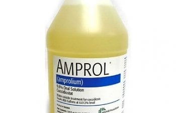 Treating Coccidiosis with Corid, Amprol, AmproMed - The