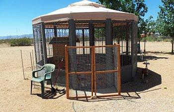My chicken palace gazebo backyard chickens for Gazebo chicken coop