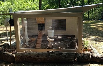 Re-purposed bed turned chicken coop!