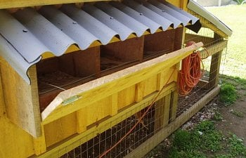 30865_nesting_boxes_and_chickens_001.jpg