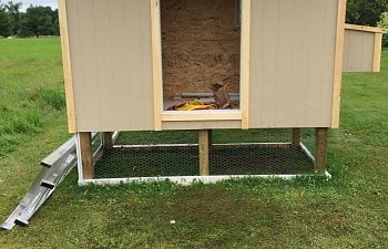 "The ""No Chickens!"" Coop"