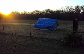 Pastured Poultry Shelter (8x8)
