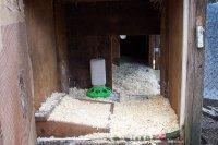 View inside broody hutch.JPG