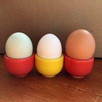 normal egg.jpg