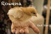 Rowena.jpg