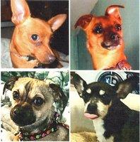 My four little guys, Bacon, Rascal, Lucky & Chico 12 25 2015.jpg