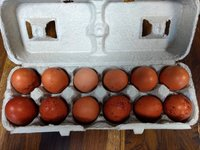 eggs in carton.jpg