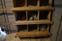 nesting boxes & bucky.jpg