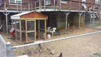 chicken-yard-04.jpg